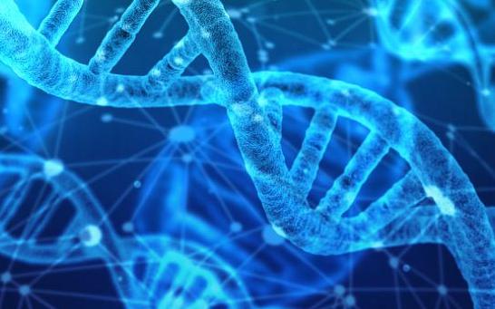 Mitochondrial quantum biology #2